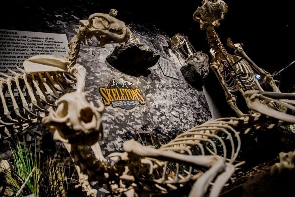 Skeletons at Skeletons Museum