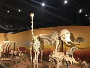 African animal skeletons at Skeletons Museum